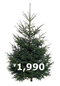 xmas_tree_2010.jpg